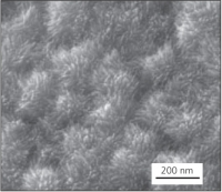 Platinum nanowire thin film catalyst electrode (Courtesy of Shangfeng Du, University of Birmingham, UK)
